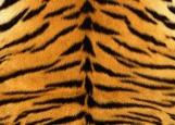 Обложка на паспорт без уголков, Тигровая