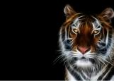 Обложка на паспорт без уголков, Тигр