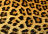 Обложка на паспорт без уголков, Nature: Animal Skin