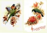 Обложка на паспорт без уголков, Птички