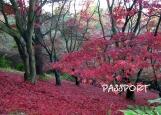 Обложка на паспорт без уголков, red autumn
