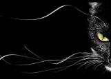 Обложка на паспорт без уголков, Черная кошка. Black cat