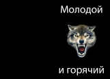 Обложка на паспорт без уголков, волк