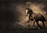 Обложка на автодокументы без уголков, Конь