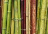Обложка на паспорт без уголков, бамбуки