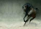 Обложка на автодокументы без уголков, Лошадь