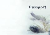 Обложка на паспорт без уголков, Кошечка