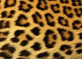 Обложка на паспорт без уголков, Леопард