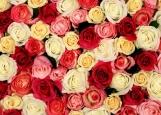 Обложка на автодокументы без уголков, розы