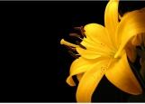 Обложка на автодокументы без уголков, лилия