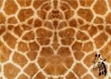 Обложка на паспорт без уголков, Жираф