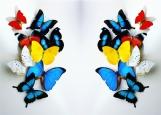 Обложка на автодокументы без уголков, райские бабочки